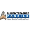 Buried Treasure Fossils